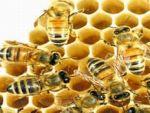 Arı ölümleri abartılıyor mu?