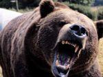 Havalar sıcak gitti, ayılar kış uykusuna yatamadı