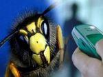 Cep telefonu arıları kovuyormuş!