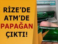 RİZE'DE ATM ÜZERİNDE 'PAPAĞAN' BULUNDU