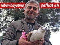 ARTVİN'DE YABAN HAYATINA ŞEFKAT ELİ