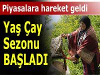 D. KARADENİZ'DE YAŞ ÇAY HASADI BAŞLADI