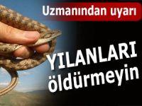 YILANLARI ÖLDÜRMEYELİM EFENDİLER!