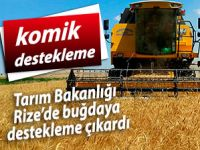 Tarım Bakanlığı Rize'de buğdaya destekleme çıkardı!
