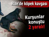 Rize'de köpek kavgası: 2 yaralı!