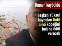 Başkan, kaybolan köpeğini getireni ödüllendirecek