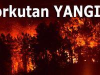 Yangında 15-20 hektar alan etkilendi