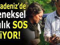 D. Karadeniz'de geleneksel arıcılık tükenmek üzere