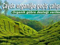 Çayda organiğe geçiş çalışmaları