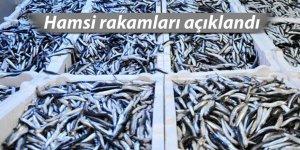 Doğu Karadeniz'de 2017 yılında 107 bin 186 ton hamsi avlandı