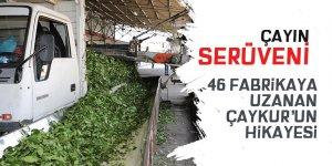 ÇAYKUR'un atölyeden 46 fabrikaya uzanan üretim yolculuğu
