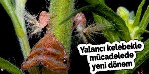 Yalancı kelebekle mücadelede yeni dönem