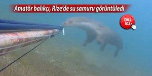 Amatör balıkçı, Rize'de su samuru görüntüledi