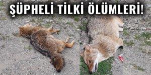 Şüpheli tilki ölümleri!