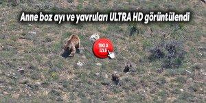 Anne boz ayı ve yavruları ULTRA HD görüntülendi