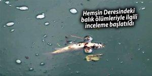 Hemşin Deresindeki balık ölümleriyle ilgili inceleme başlatıldı