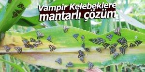 Vampir Kelebeklere mantarlı çözüm