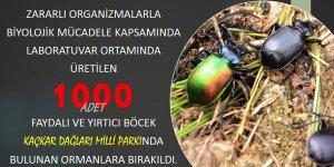 Terminatör böcekler Sekiz Dişli'ye karşı
