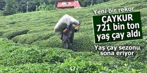 Yaş çay sezonu sona ererken; ÇAYKUR 721 bin ton yaş çay aldı