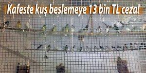 Kafeste kuş beslemeye 13 bin TL ceza!