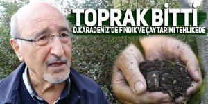 Doğu Karadeniz'de fındık ve çay tarımı tehlikede