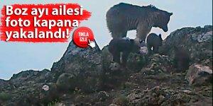 Boz ayı ailesi foto kapana yakalandı!