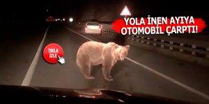 Yola inen ayıya otomobil çarptı!