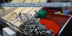 Balıkçı esnafının gözü Gürcistan'dan gelecek hamside