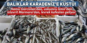 Balıklar Karadeniz'e küstü!