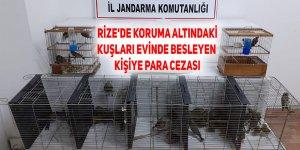 Rize'de koruma altındaki kuşları evinde besleyen kişiye 47,3 bin lira ceza