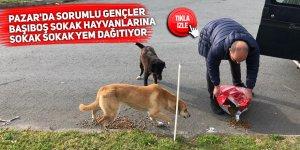 Pazar'da sorumlu gençler, başıboş sokak hayvanlarına yem dağıtıyor