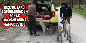 Rize'de taksi şoförlerinden sokak hayvanlarına mama desteği