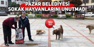 Pazar Belediyesi sokak hayvanlarını unutmadı