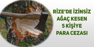 Rize'de izinsiz ağaç kesen 5 kişiye para cezası