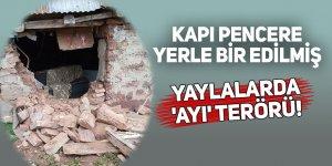 YAYLALARDA 'AYI' TERÖRÜ!
