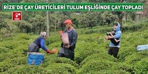 Rize'de çay üreticileri tulum ile müzik eşliğinde çay topladı