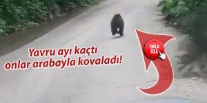 Yavru ayı kaçtı, onlar kovaladı
