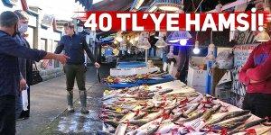 HAMSİ 40 TL'DEN TEZGAHTA YERİNİ ALDI