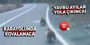 Yavru ayılar yola çıkınca!
