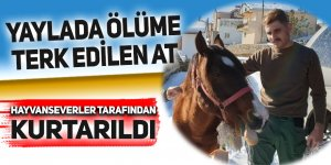 Yaylada ölüme terkedilen at kurtarıldı