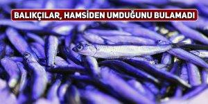 Balıkçılar, hamsiden umduğunu bulamadı