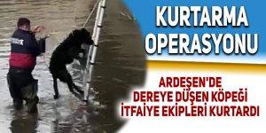 Ardeşen'de dereye düşen köpeği itfaiye ekipleri kurtardı