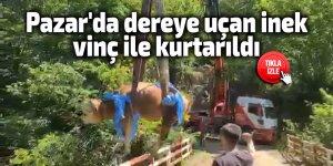 Pazar'da dereye uçan inek vinç ile kurtarıldı